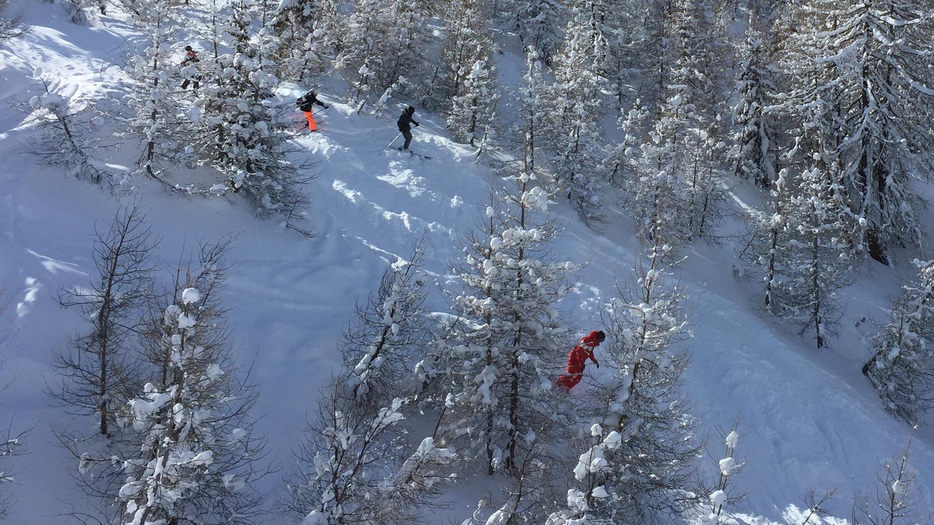 Ski guiding between trees, Sainte Foy